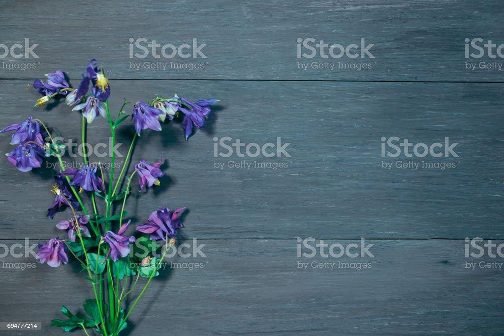 Purple columbine over dark gray