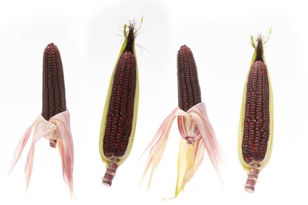 Purpler Mais isoliert auf weißem Hintergrund – Foto
