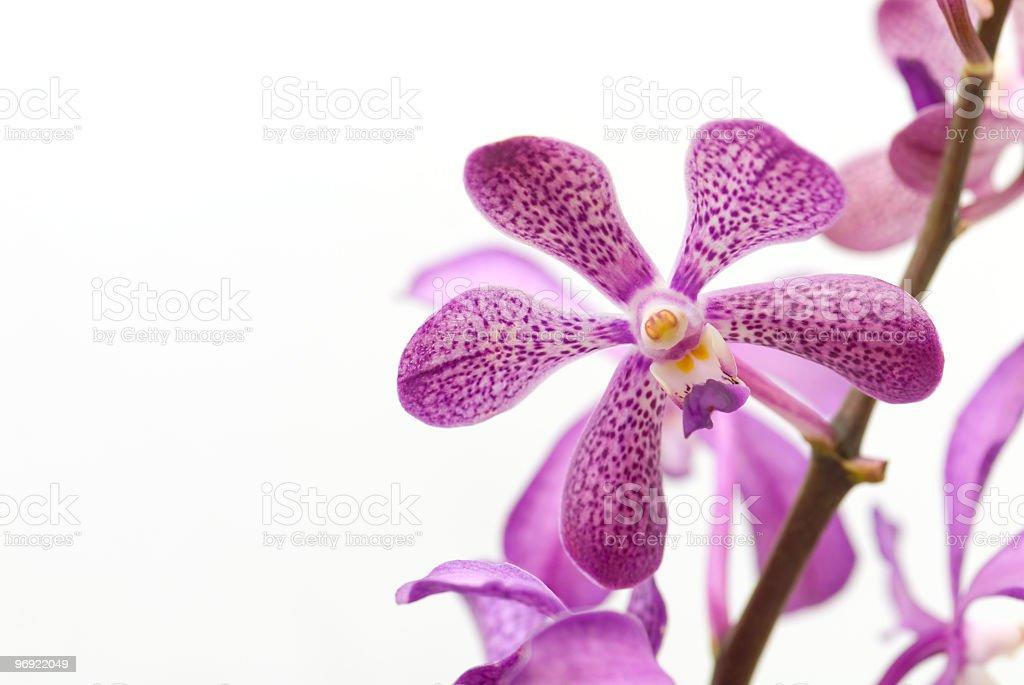 Purple Dots royalty-free stock photo