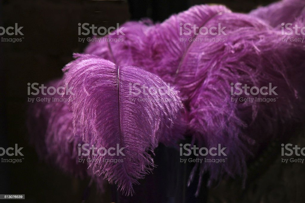 Purple Feather Boa with Black Background stock photo