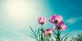 sunlight shining through purple flower, low angle view