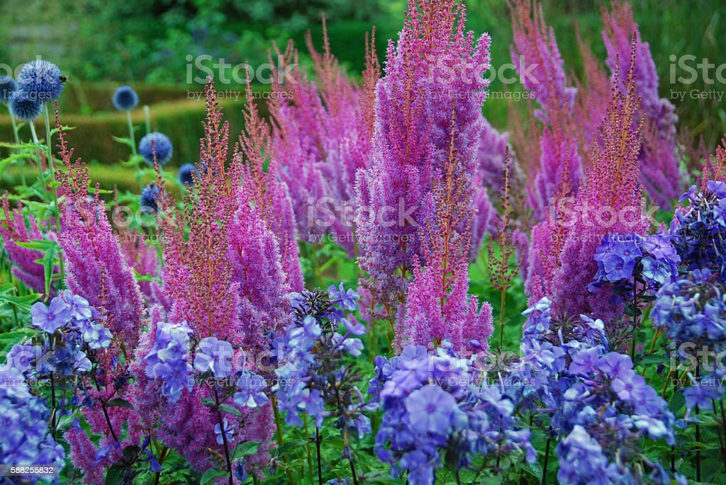 Purple flower Arrangement inside of an Ornamental Garden. stock photo