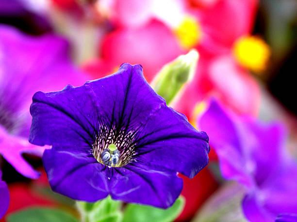 Purple Flower Closeup stock photo