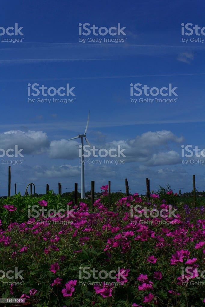Purple flower field royalty-free stock photo