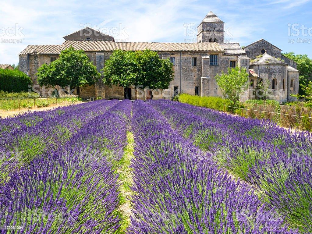 Purple flower fields in St Paul De Mausole Asyulm stock photo