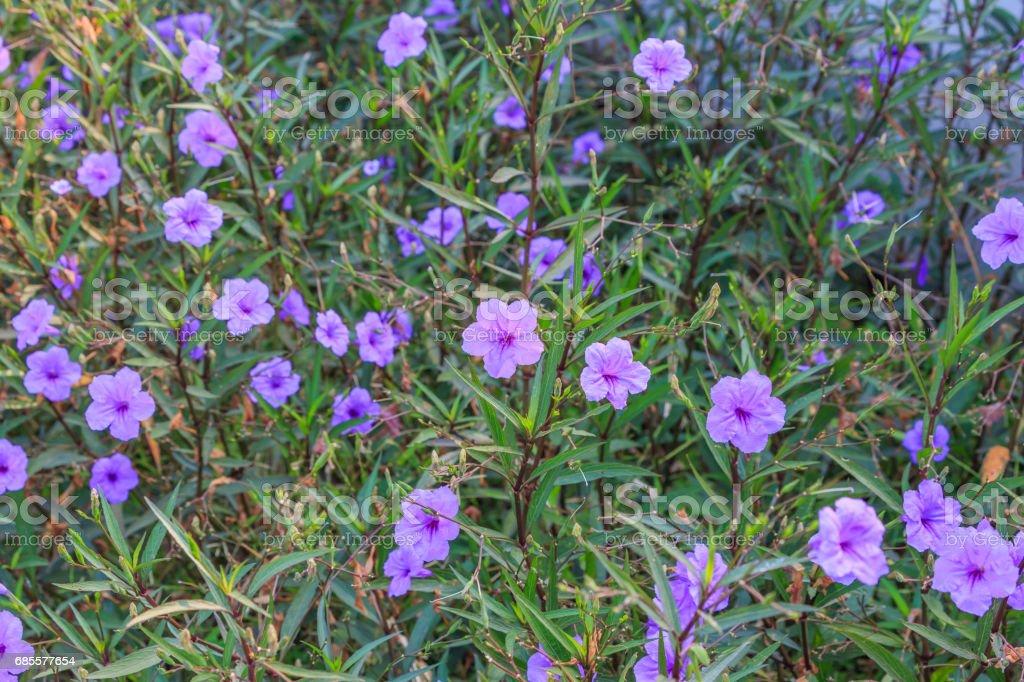 Purple flower fresh. 免版稅 stock photo