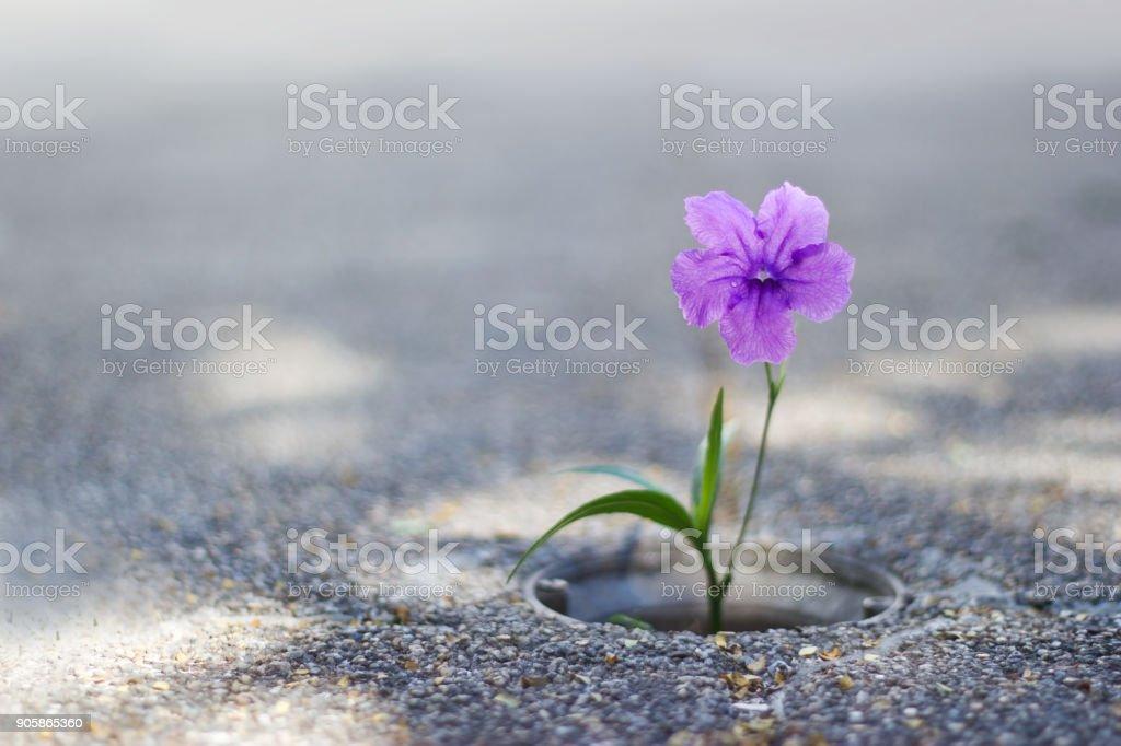 Lila Blume wächst auf Riss Straße Hintergrund – Foto