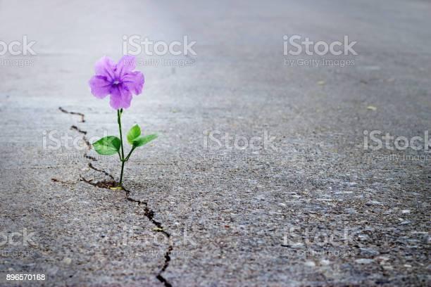 Purple flower growing on crack street soft focus blank text picture id896570168?b=1&k=6&m=896570168&s=612x612&h=nz giqgvtijzdebur2qybudeazthawhv7rrteztdczc=