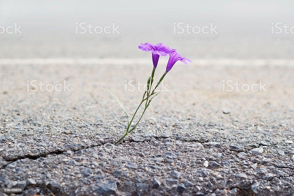 Lila Blume wächst auf zu knacken Straße, Weichzeichner – Foto