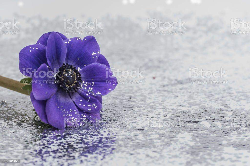 Purple flower isolated stock photo