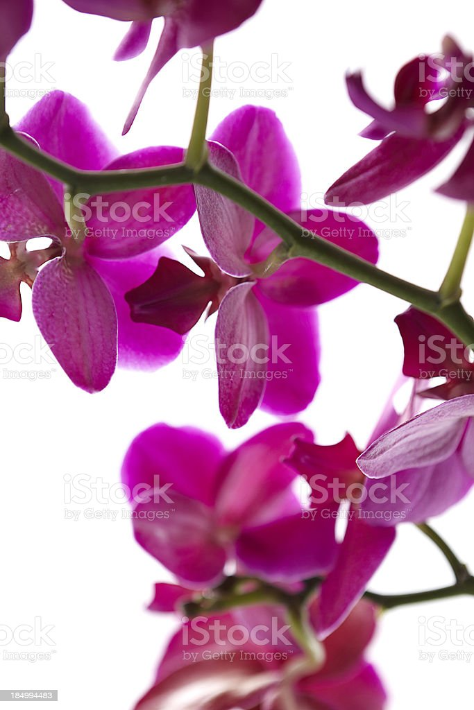 Purple flower on a branch stock photo