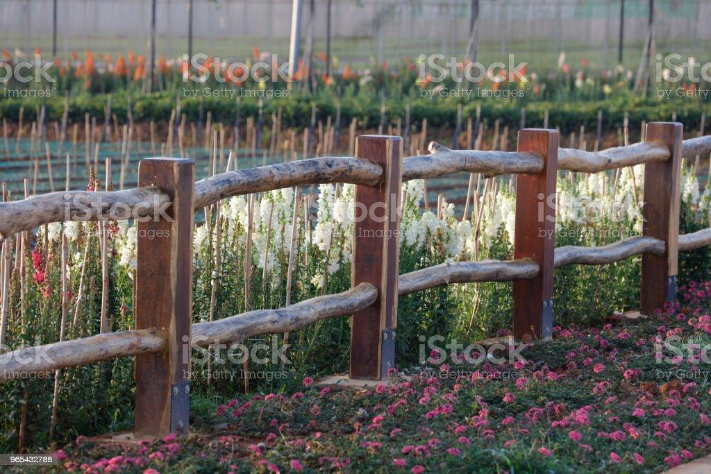 Purple flower on wooden fence zbiór zdjęć royalty-free