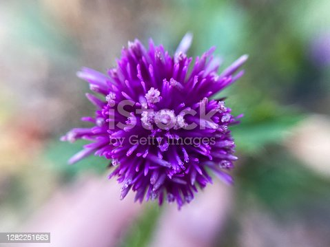 Macro photography of purple flower on blur background.