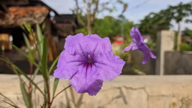 Purple flower picture id1302646424?b=1&k=6&m=1302646424&s=612x612&w=0&h=oh9uxmht uamduiq5z5pbhjef6qocdtrwzplin82lai=