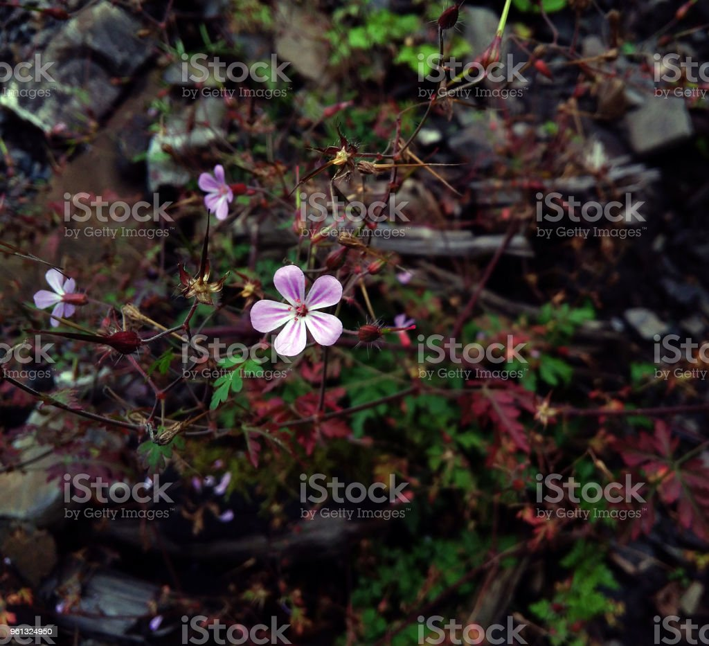Purple flower. stock photo
