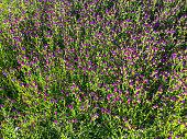 Purple flower shoot in forest