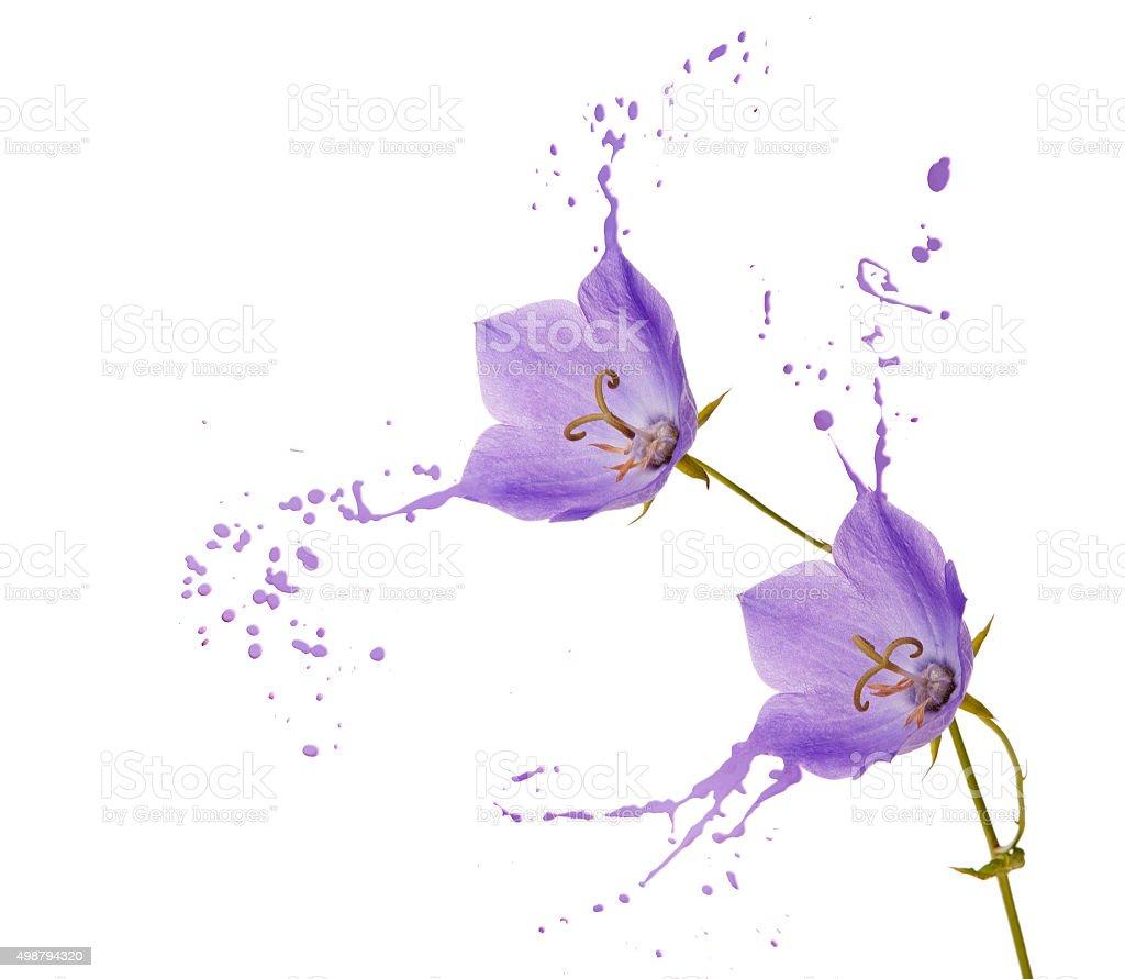 purple flower splashes stock photo