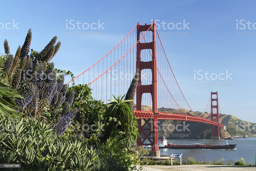 Purple Flowers at Golden Gate royalty-free stock photo