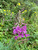 Purple flowers in full bloom in the wild. Beautiful colourful shot showing the full blossom of this wild plant.
