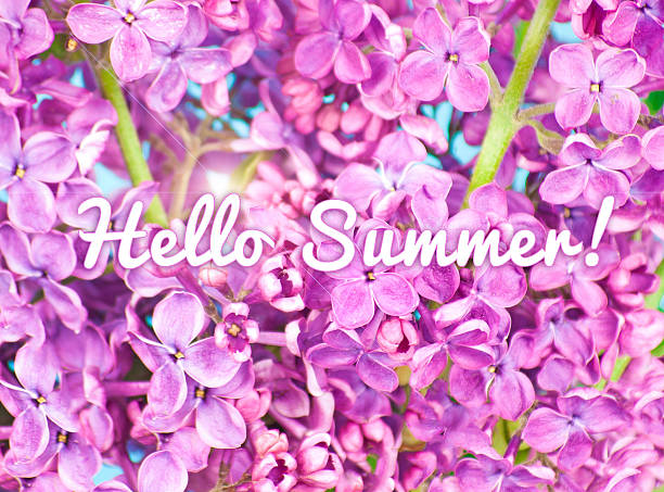 Purple flowers close up,with text: Hello Summer! stock photo