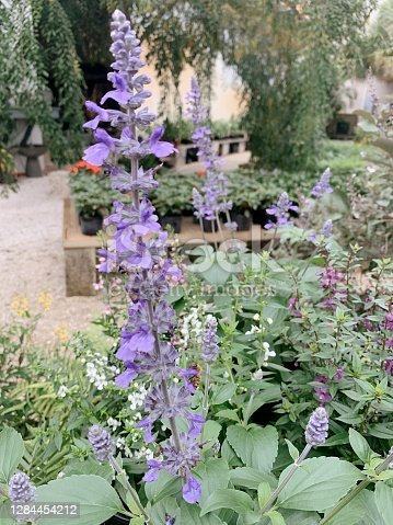 A colorful purple flowers in a garden filled with a variety of colorful flowers and butterflies!