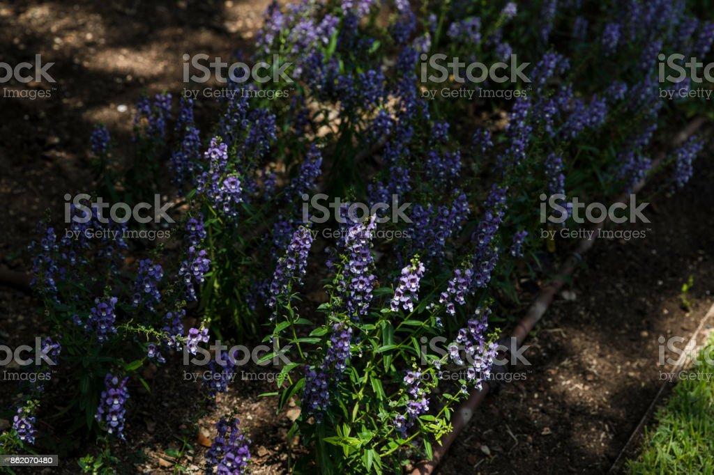 Purple flowers in shadow stock photo