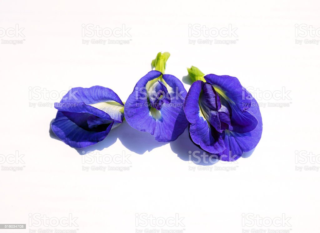 Purple flowers of Butterfly Pea. stock photo