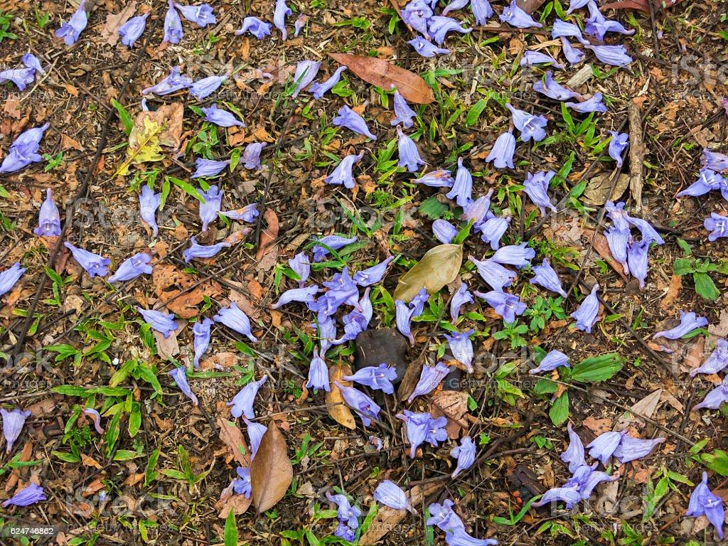 Purple flowers on grass pattern stock photo