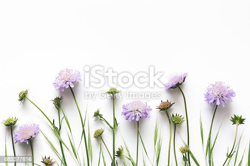istock Purple Flowers On White Background 683377616