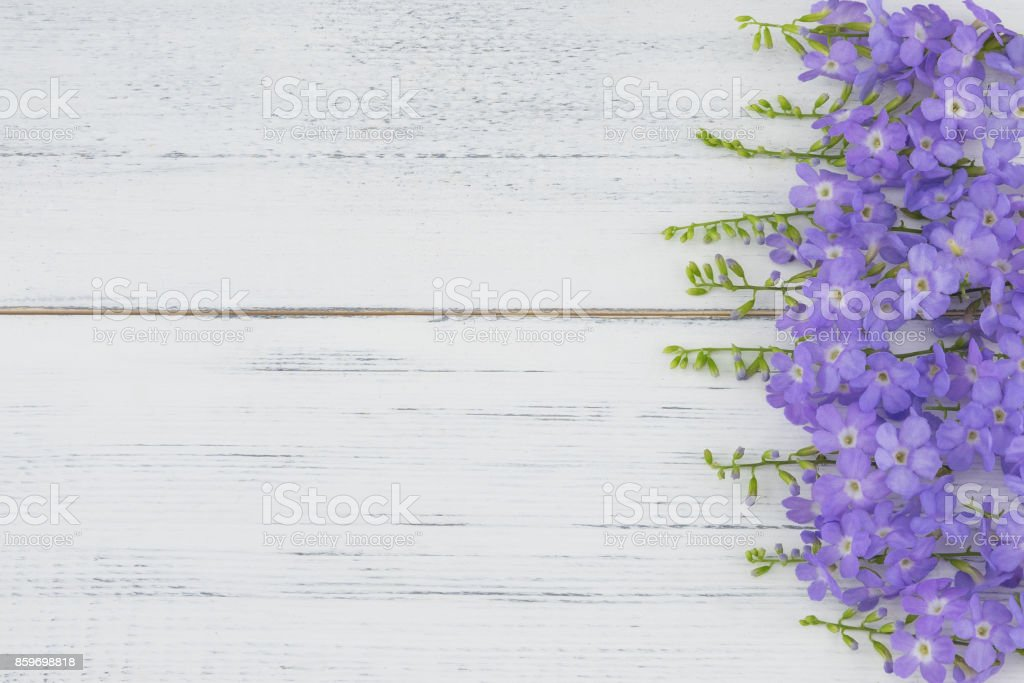 Purple flowers on white wood background stock photo