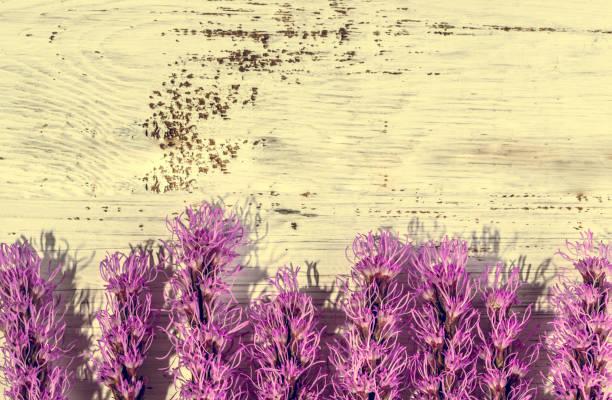 lila blüten auf holz, kartenvorlage kopieren raum - herbst hochzeitseinladungen stock-fotos und bilder