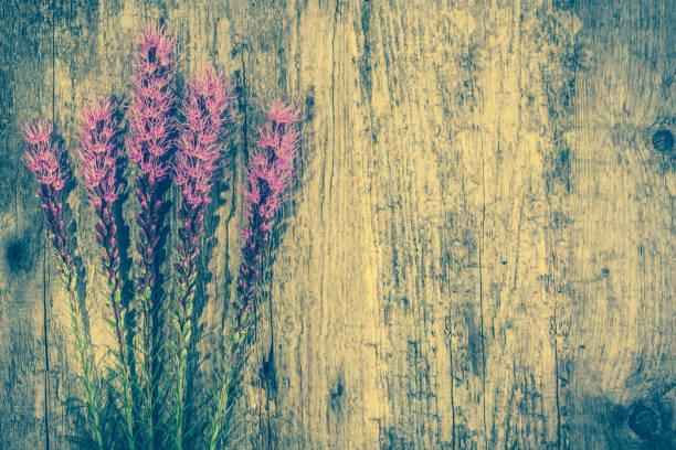 lila blüten auf holz, rustikaler hintergrund kopieren raum - herbst hochzeitseinladungen stock-fotos und bilder