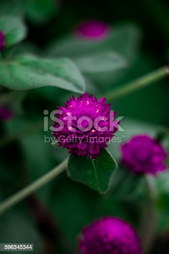 Purple Flowers Stock Photo & More Pictures of Beauty