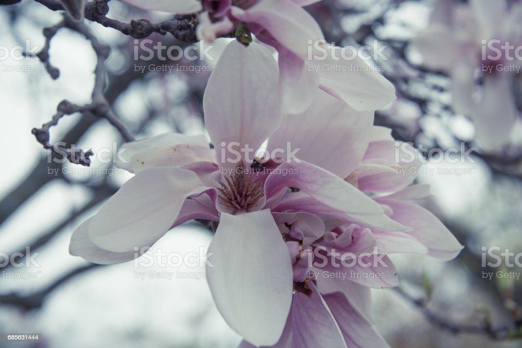 紫色的花 免版稅 stock photo