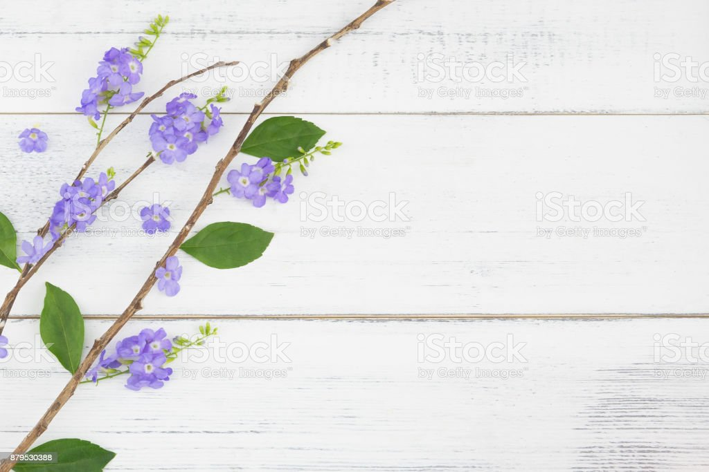 Purple flowers with branch and green leaves on white wood stock photo