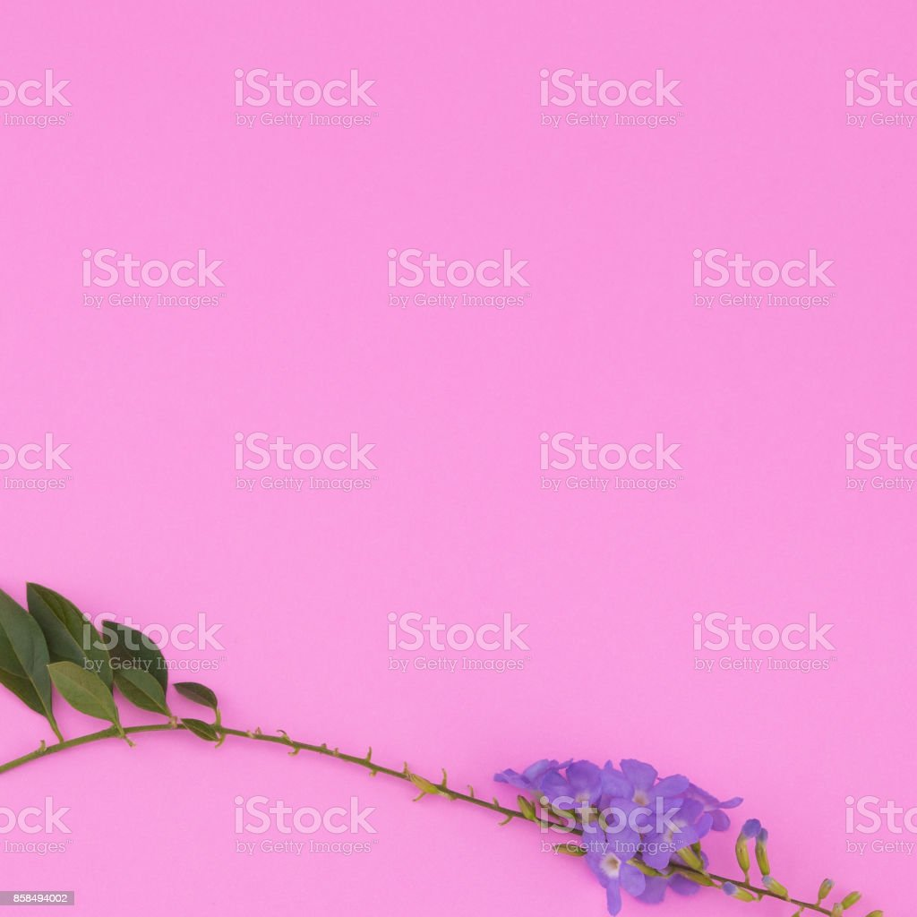 Purple flowers with branch and green leaves stock photo