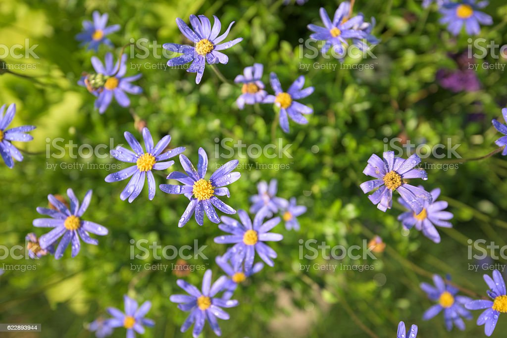 Purple Flowers with Dew stock photo
