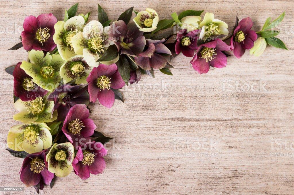 Purple green flowers vintage background stock photo