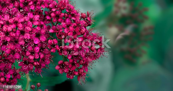 901386728 istock photo Purple green nature floral background 1161611295
