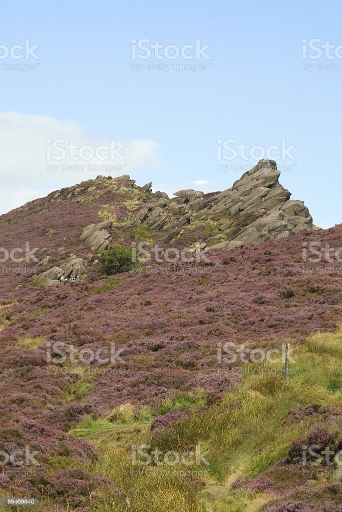 Purple heather moorland stock photo