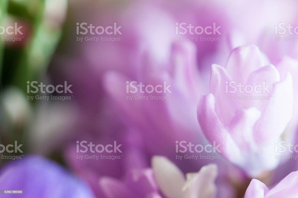 Purple hyacinth ramo de flores-Imagen de Stock foto de stock libre de derechos