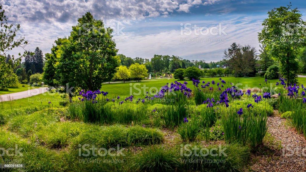 Purple iris in the Arboretum stock photo