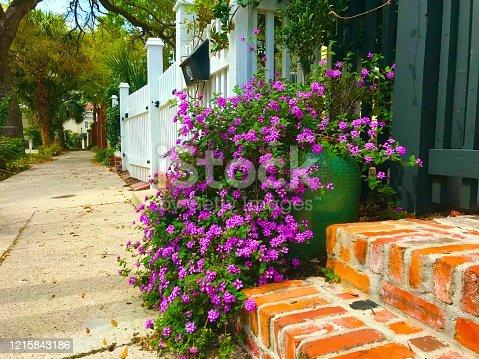 Purple lantana downtown Charleston