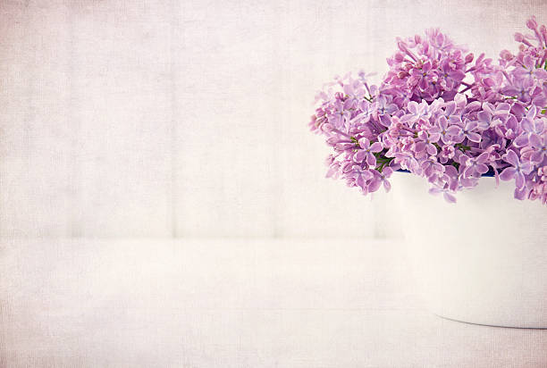 Purple lilac spring flowers on vintage textured background stock photo