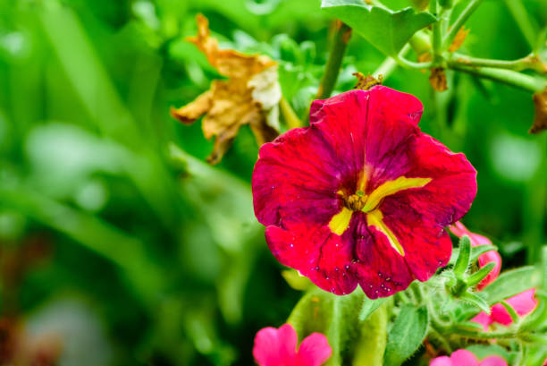 Blume lila Makro – Foto