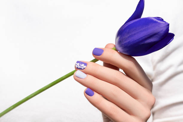 Purple nail design. Female hand with purple manicure holding tulip flower stock photo