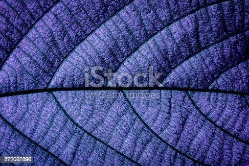 1155045999 istock photo Purple Natural Macro 872062896