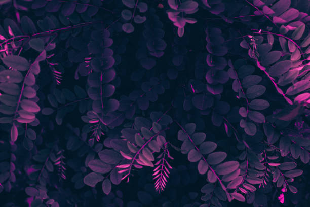 Purple nature leaves background stock photo