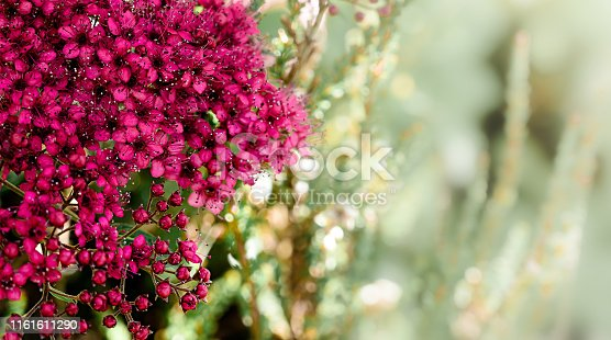 901386728 istock photo Purple nature spring background 1161611290