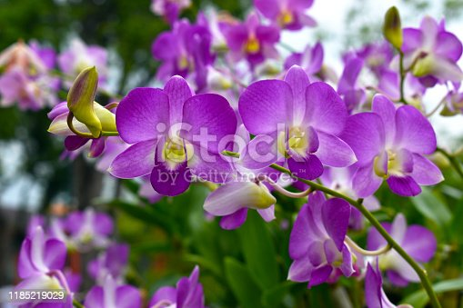Purple orchid flower, Beautiful lavender color of wild orchid flower among blurry green bokeh background